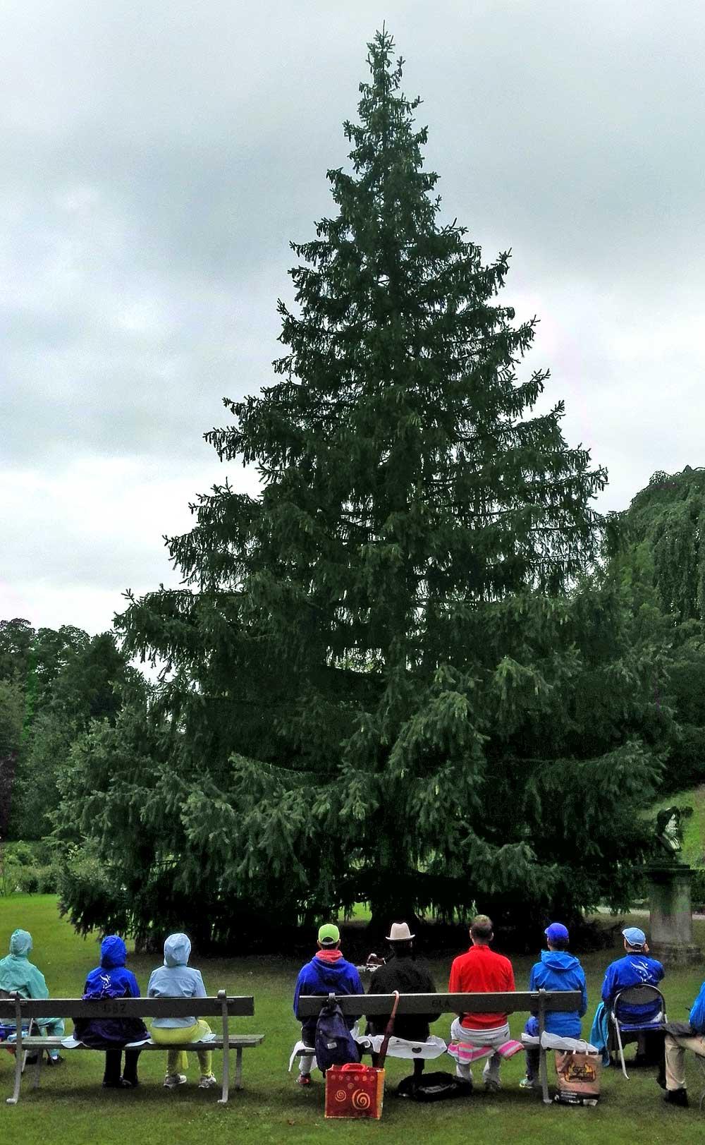 tree-zurich-sri-chinmoy